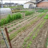 4月の畑 (新緑の候)