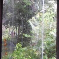 7月14日 但馬高原植物園 雨の中 和池の大カツラ クサレダマ ツチアケビ
