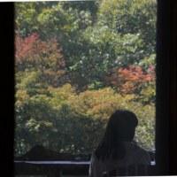 暖色に染まる午後の森。