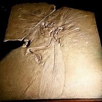 化石と鉱物に惚れる~大英自然史博物館展