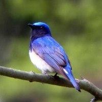 幸せの青い鳥!