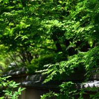 筥崎宮花庭園からp2(D810,28-300mm)