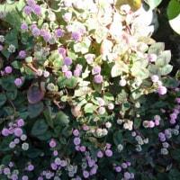 なも知らぬ花が小川に咲いてました