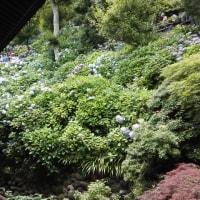 「長谷寺」の混雑