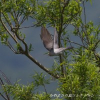 今日の鳥コレクション・・・草原に行って①