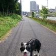 今朝のお散歩🎵with シャンテ