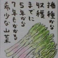 2017年5月25日の絵手紙