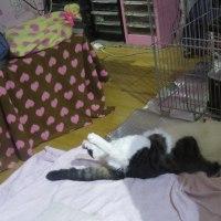 雨宮日記 2月26日(木)の2 猫の平和