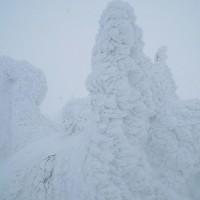 蔵王ライザから登る御田神周辺の樹氷