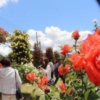 2017 信州なか一本木公園・バラ祭り入園者前年を大幅に上回る。