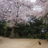2日連続の花見(=^・^=)