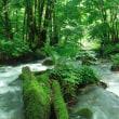 奥飛騨の渓流