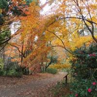初冬の横浜自然観察の森散策