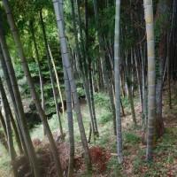 竹の花の続き