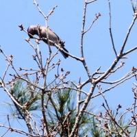 散歩で出会う野鳥