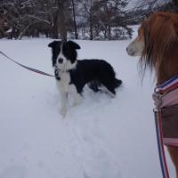 新雪・深雪散歩