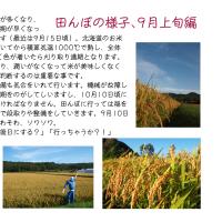 田んぼの様子9月編