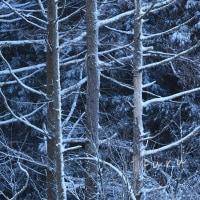雪を纏いて