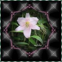 雨で花が咲き進む