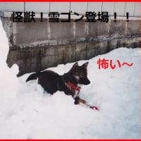 あずきちゃん、初めて雪を体験しました!