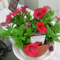 久しぶりに花を買う