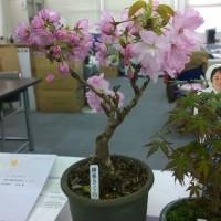 西部事務所4月・5月のお花たち