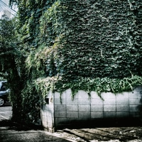 【Aug_17】裂開する緑_OVERGROWTH#7