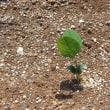 枝豆の芽が出ました!