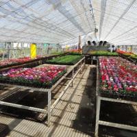 名農の花壇苗2017