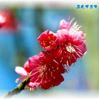 花彩る 桃の花はやっぱ桃色が似合う