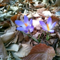 花を愛でに行く