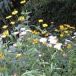爽やかな夏の花