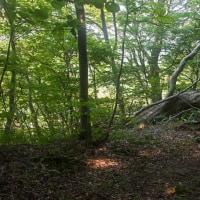 初夏の蔵王の森