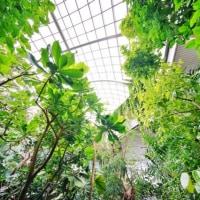 南国の花々(板橋区立熱帯植物館)