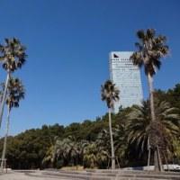 海岸通りの椰子の木