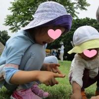 2017年6月29日(木)の【写真館】