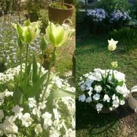春の庭2017  その1