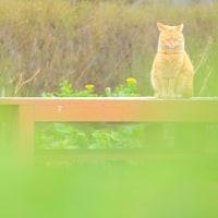 ~ 青葉の森の猫さん ~  にゃ~にゃ~の日