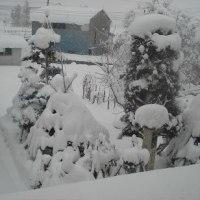 寒波到来雪まみれ