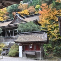 吉野の秋模様と、梅田の冬支度