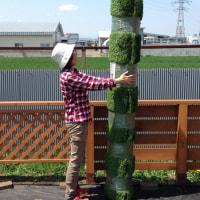庭リフォーム~人工芝編~パート2