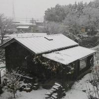 東京都心で11月の初雪 54年ぶり