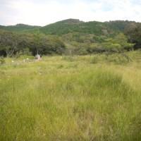 葦毛湿原の続き。