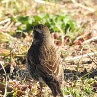 02/19日撮影 野鳥