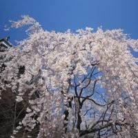 4/18(火)のイキメンニュース~暮らし&身近な法律・判例の情報