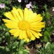 花とヒヨちゃん