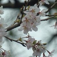 チョコっと甘く、ふと気がつけば頬にピシっと春一番。浪花節だよ、時の刻みも人の世も…