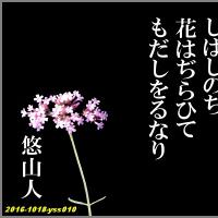 旋頭歌写真010 花に恋ひ