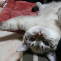 廻るもの  12月のネコ