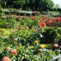 紫陽花、バラなど色とりどりの花が咲く「京都府立植物園」。夕方はミモロのお気に入りの時間